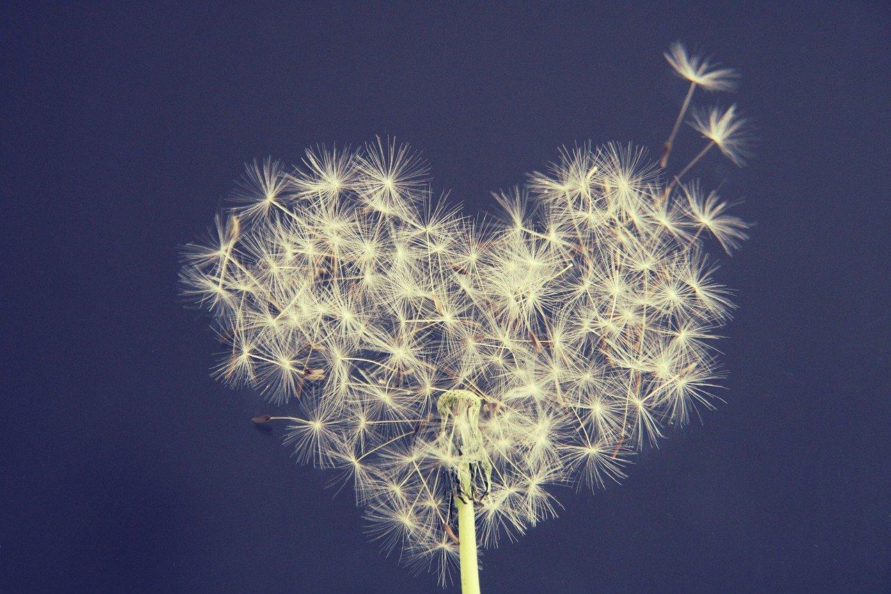 150520 Flower