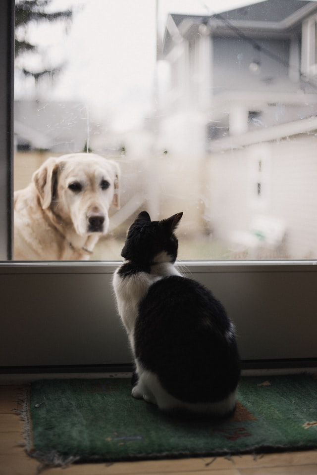 210520 Dogs cats 2