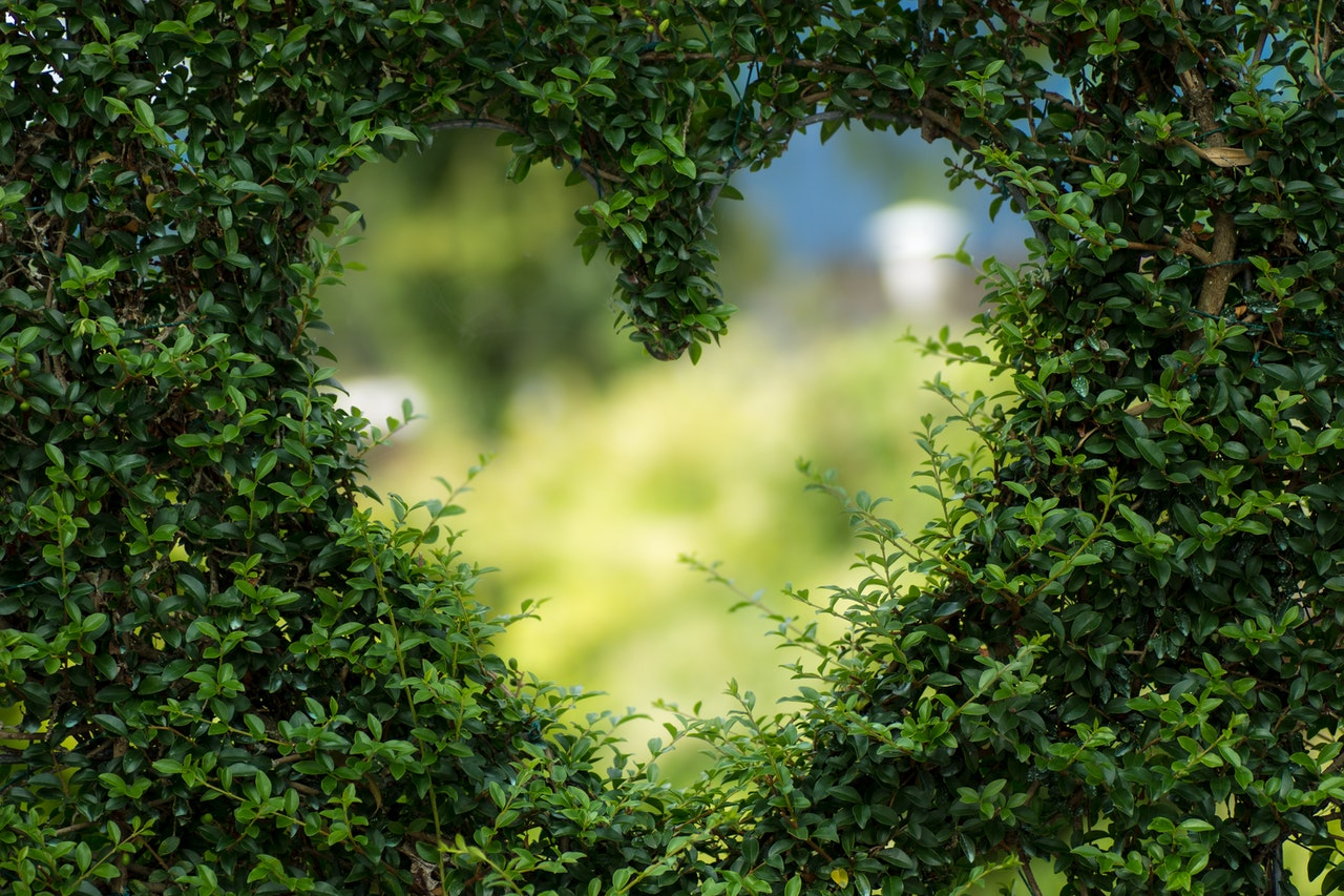 150520 Garden love