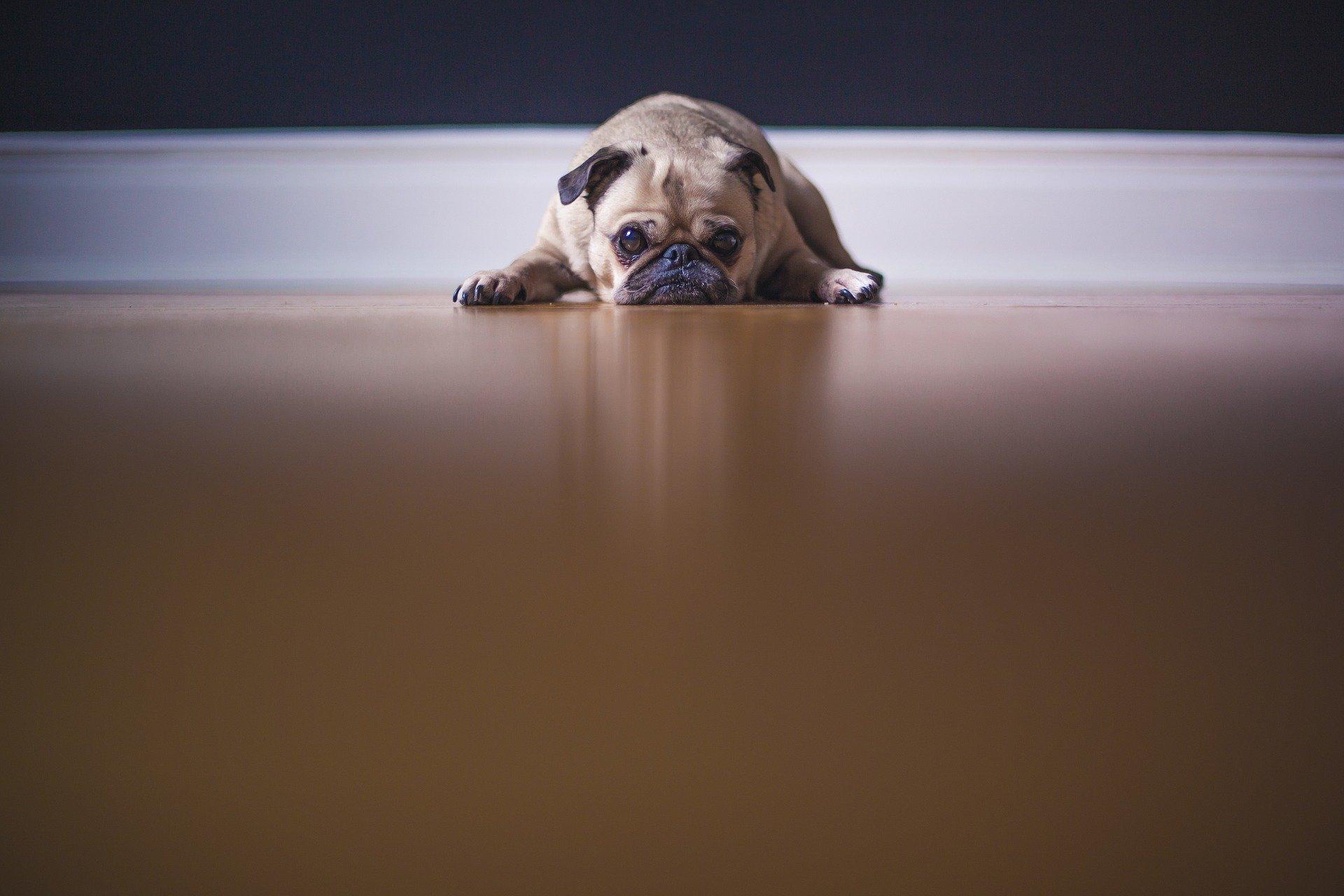 180121 Down dog
